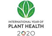 iyph2020-logo